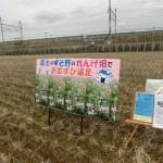 れんげ畑で食べるおむすびは最高!!