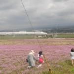 第2回富士山れんげ祭りは大盛況!!