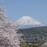 富士山に桜はよく似合う!