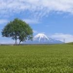 身近にも富士山がきれいに見える場所があります!!