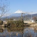 赤どぶ池での富士山ビューポイントと生物多様性