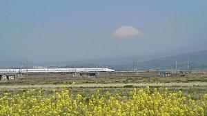 新幹線と菜の花